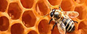 bee-hive-removal-experts