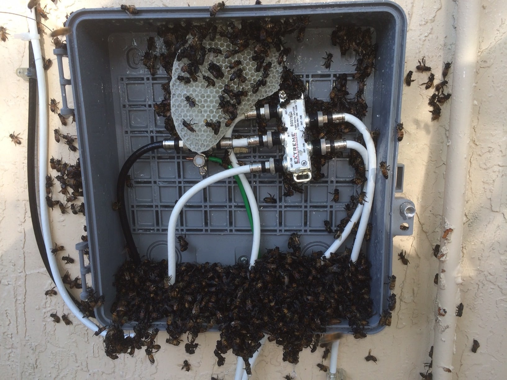 bees inside a cable box miami bee removal corp 786. Black Bedroom Furniture Sets. Home Design Ideas